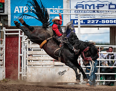 Spur Lacasse - Calgary Stampede's Special Delivery - copyright Billie-Jean Duff
